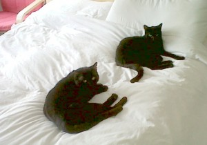 Spike-and-Monty-on-bed